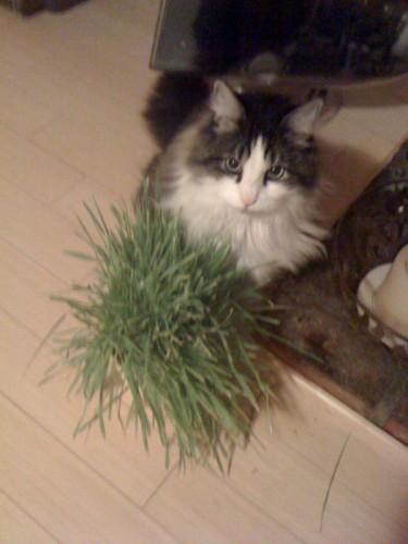 fitzgrass