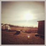 Winter greenhouse and chicken coop