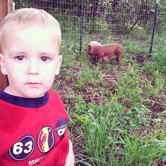 Liam and the arrival of piglets